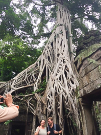 建造物の間から育った樹木